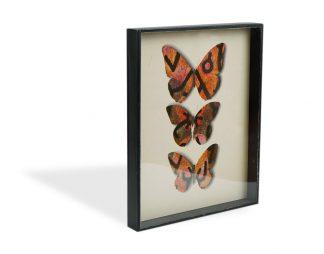 Jiří Kolář (1914-2002), Butterfly showcase, 1970